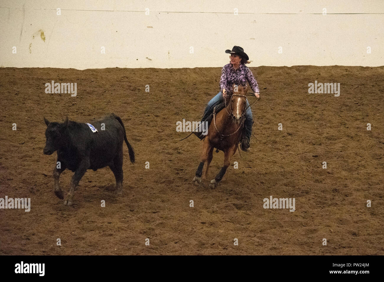 Stampede Cattle Stock Photos Amp Stampede Cattle Stock