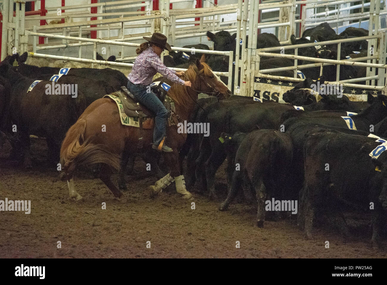 Canadian Cowgirl Stock Photos Amp Canadian Cowgirl Stock
