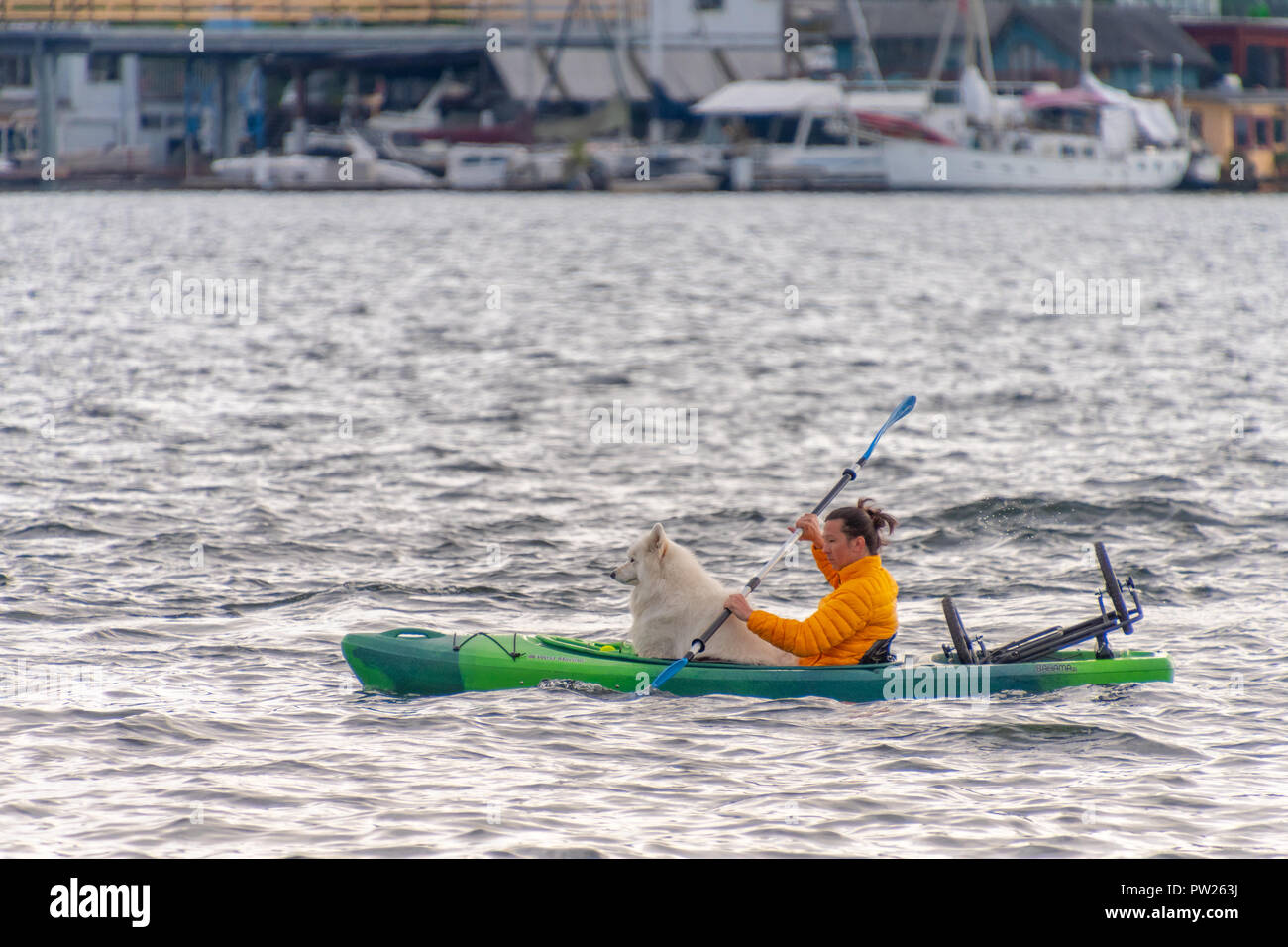 TUESDAY, MAY 8, 2018, SEATTLE, WA: A man kayaks across Seattle's Lake Union with his dog at sunset. - Stock Image