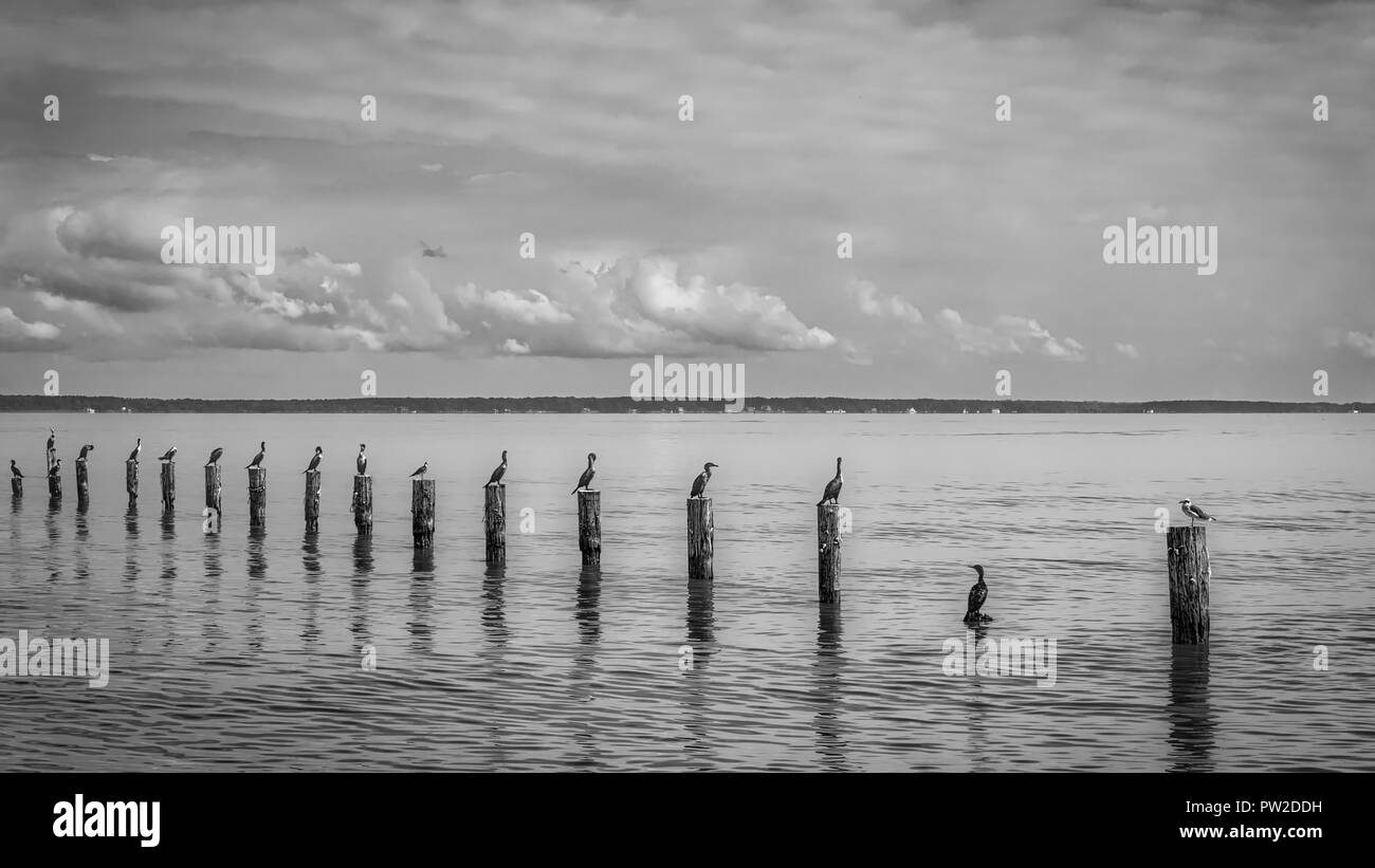 Birds Sitting On Posts Near The Shores Of Colonial Beach Virginia