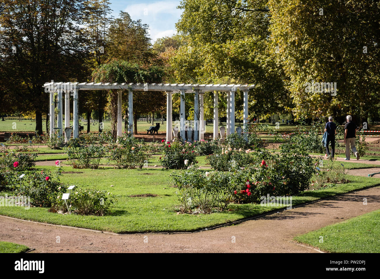 The rose garden of the Tête d'Or park - Stock Image