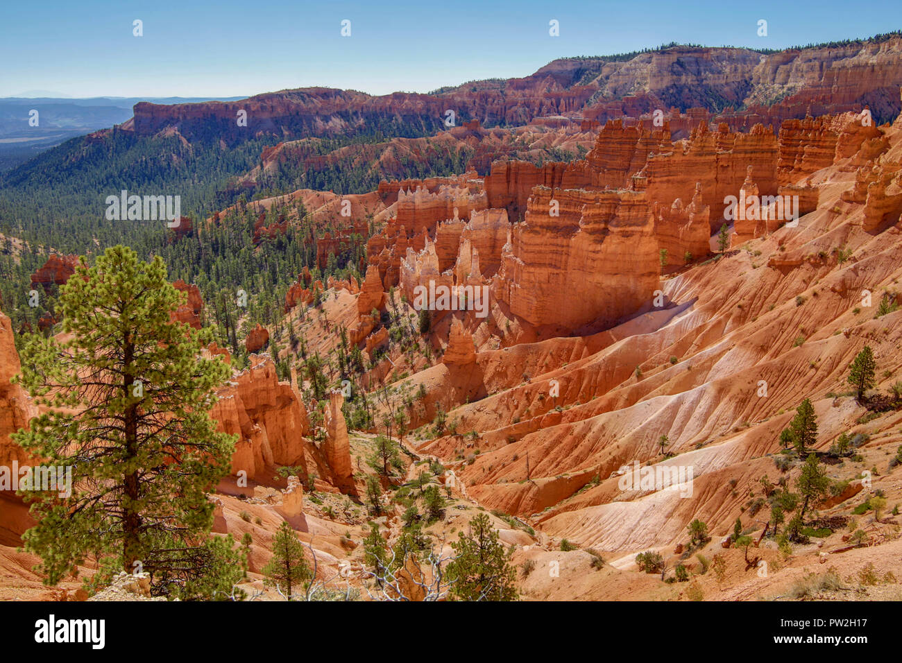 Bryce Canyon National park in Utah - Stock Image