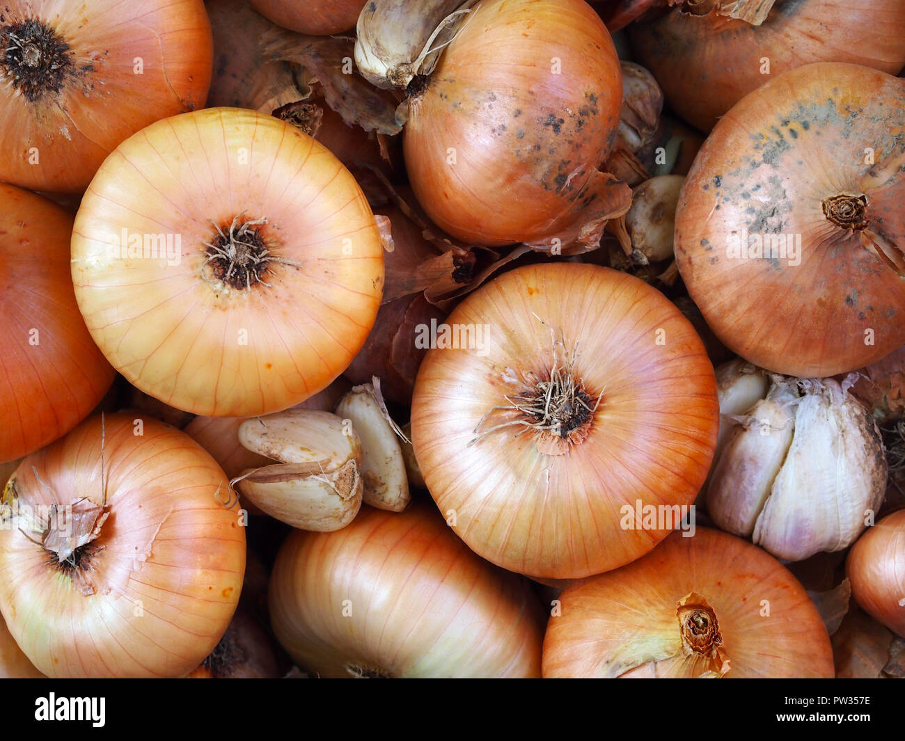 Freshly picked onions and garlic. Top view. Stock Photo