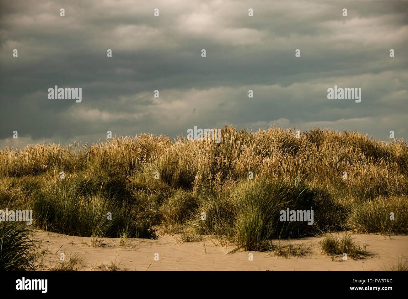 Long strand sand dunes
