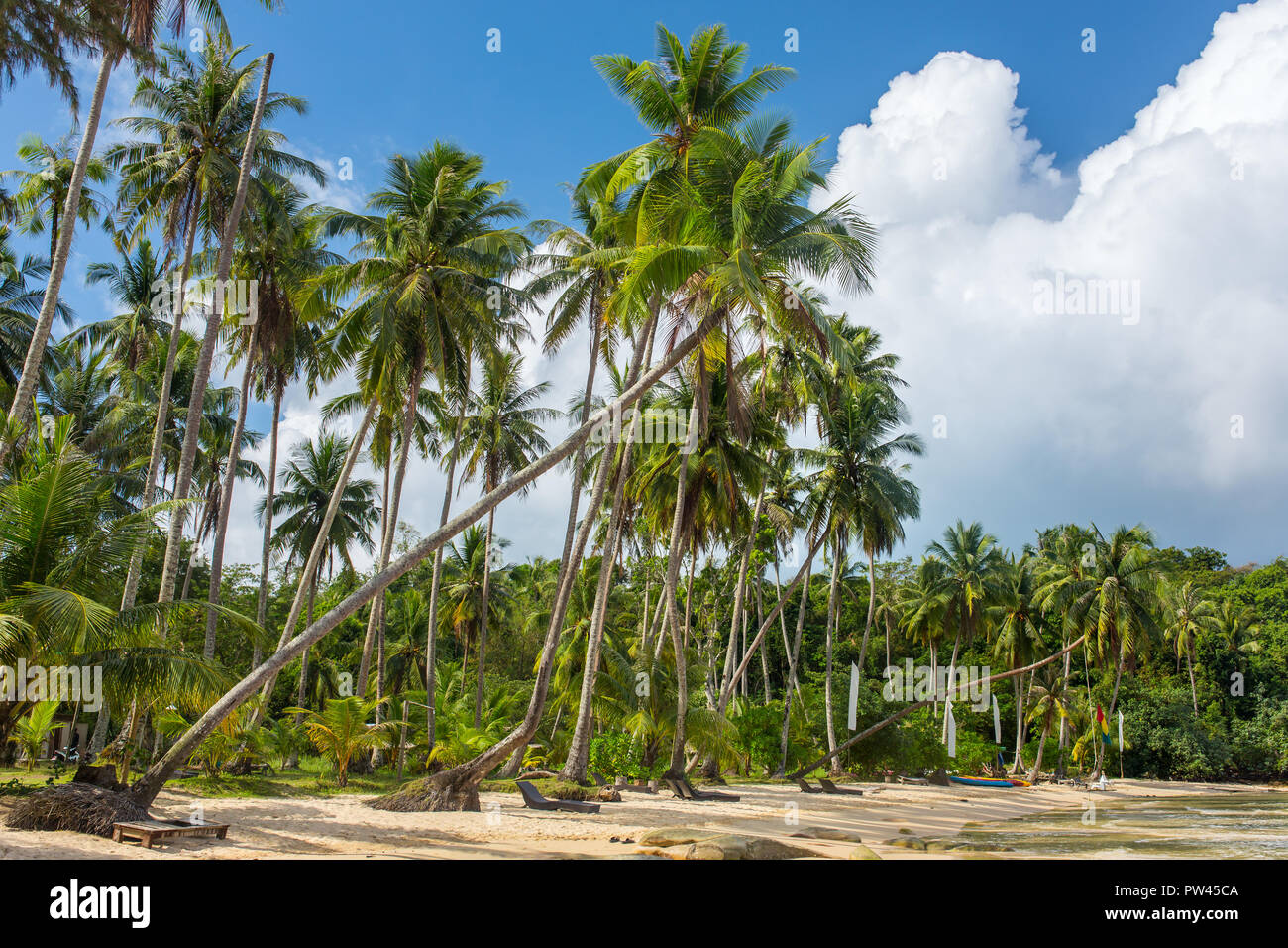 Palm trees on beautiful tropical beach on Koh Kood island in Thailand - Stock Image