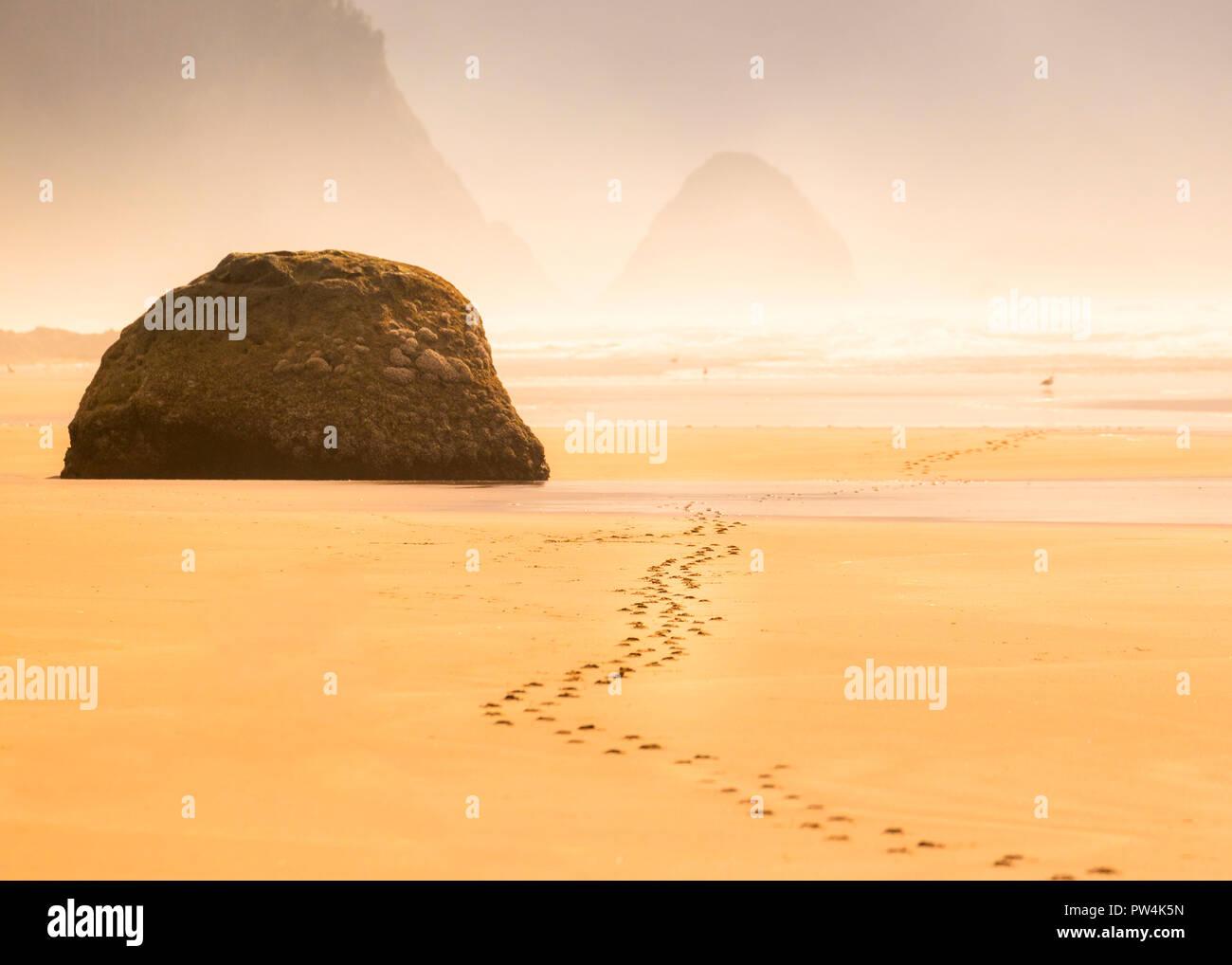 Footprints in the sand near Hug Point on the Oregon coast, USA. - Stock Image
