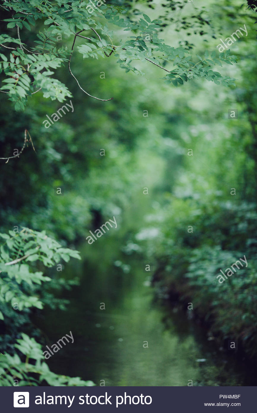 Stream amidst plants in forest - Stock Image