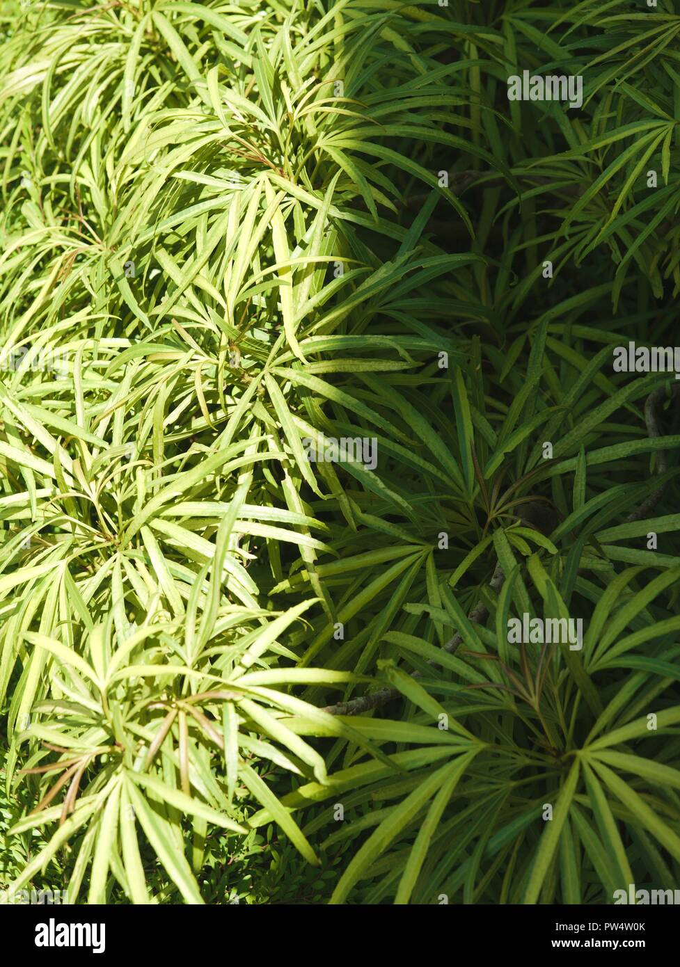Plants and green - Stock Image