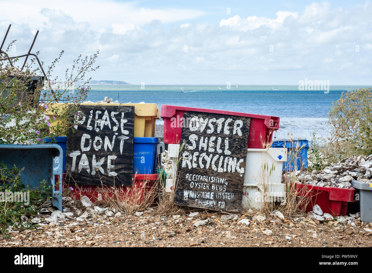 Whitstable beach, Kent, UK - August 25, 2012: Oyster Shell recycling baskets where oyster shells are piled up as an effort to re-establish oyster beds Stock Photo
