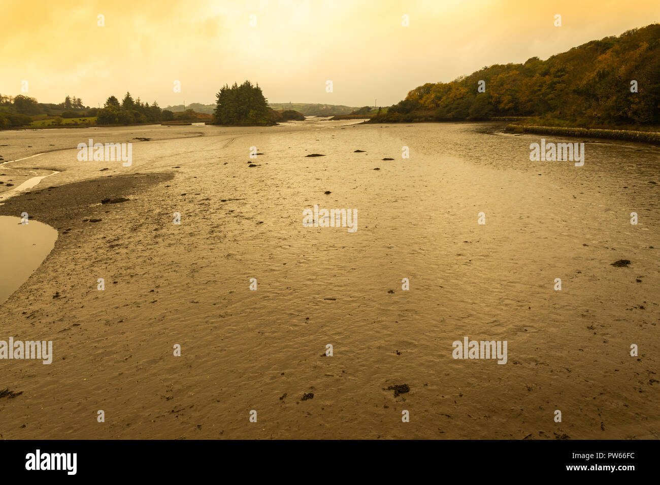 tidal estuary at low tide in dawn sunlight in autumn Stock Photo