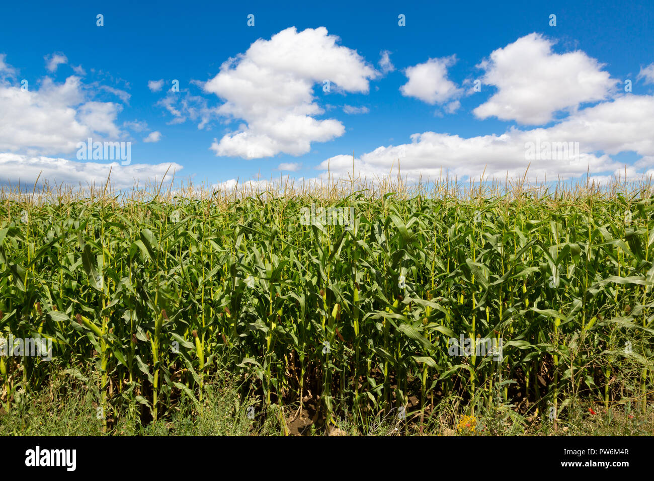 Camino de Santiago (Spain) - Fields and clouds along the way of St.James, in the spanish meseta - Stock Image