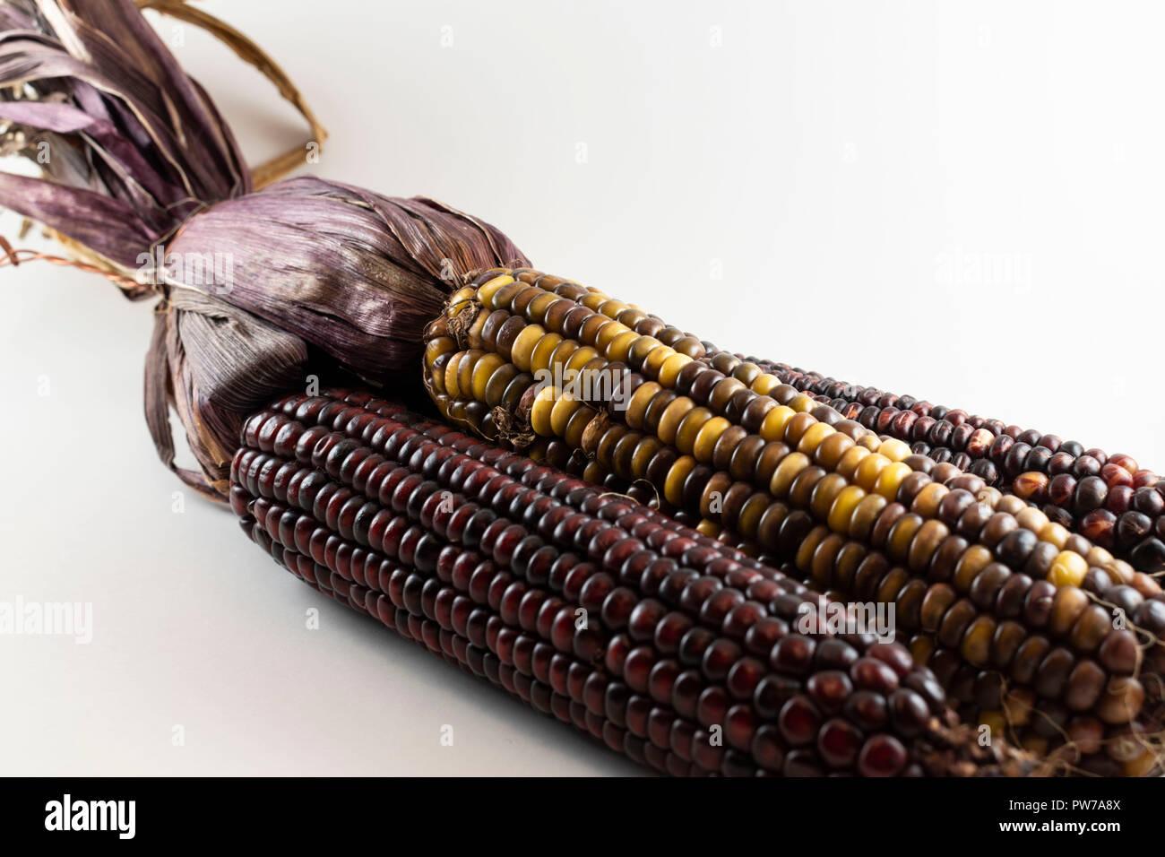 Indian Corn isolated white background - Stock Image