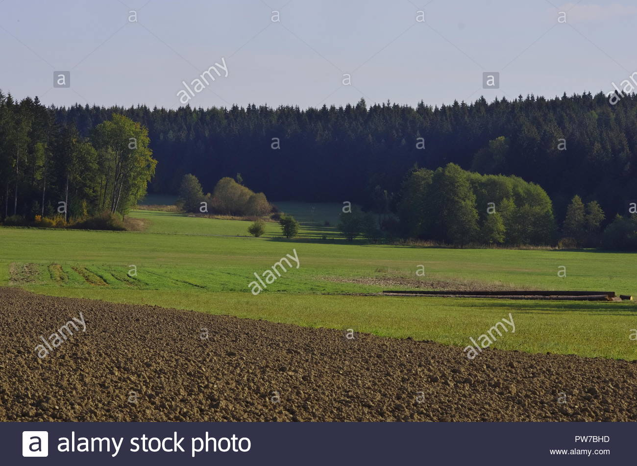 Landscape with trees, meadows and fields - Stock Image