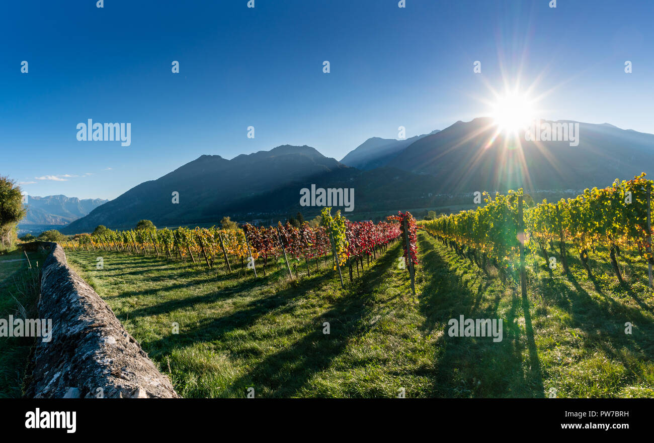 panorama vineyard and mountain landscape in the Swiss Alps in autumn with sun setting slowly behind silhouette of mountain peaks - Stock Image