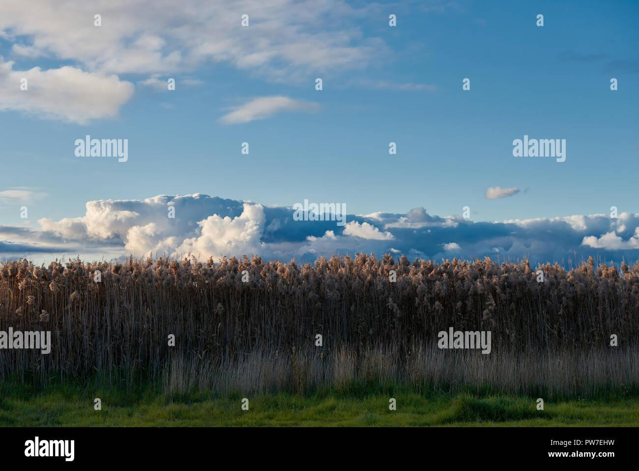 tall grass field above tall grass field under dramatic sky at low light light stock photo