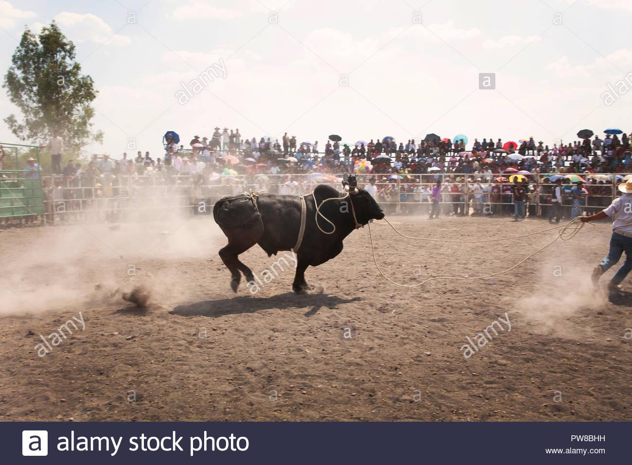 Mexican Charros Charreada Mexican Rodeo Stock Photos