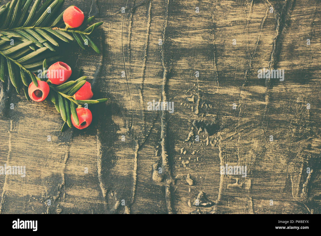 Holiday  evergreen branches and berries on a rustic wooden background - Stock Image