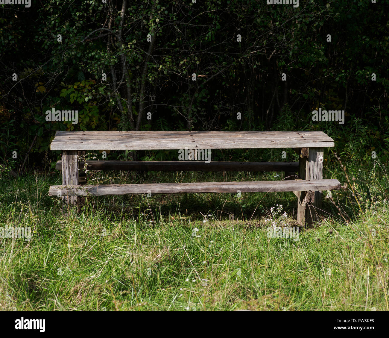 Magnificent Lonely Wooden Bench For Relax In Forest Preserve Stock Photo Machost Co Dining Chair Design Ideas Machostcouk