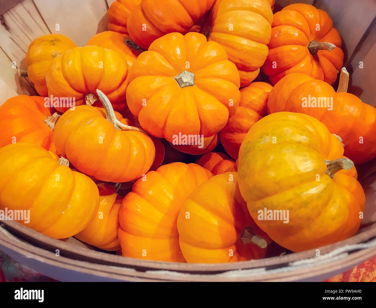 Wooden Basket Filled With a Large Group of Fresh Pumpkins - Stock Image