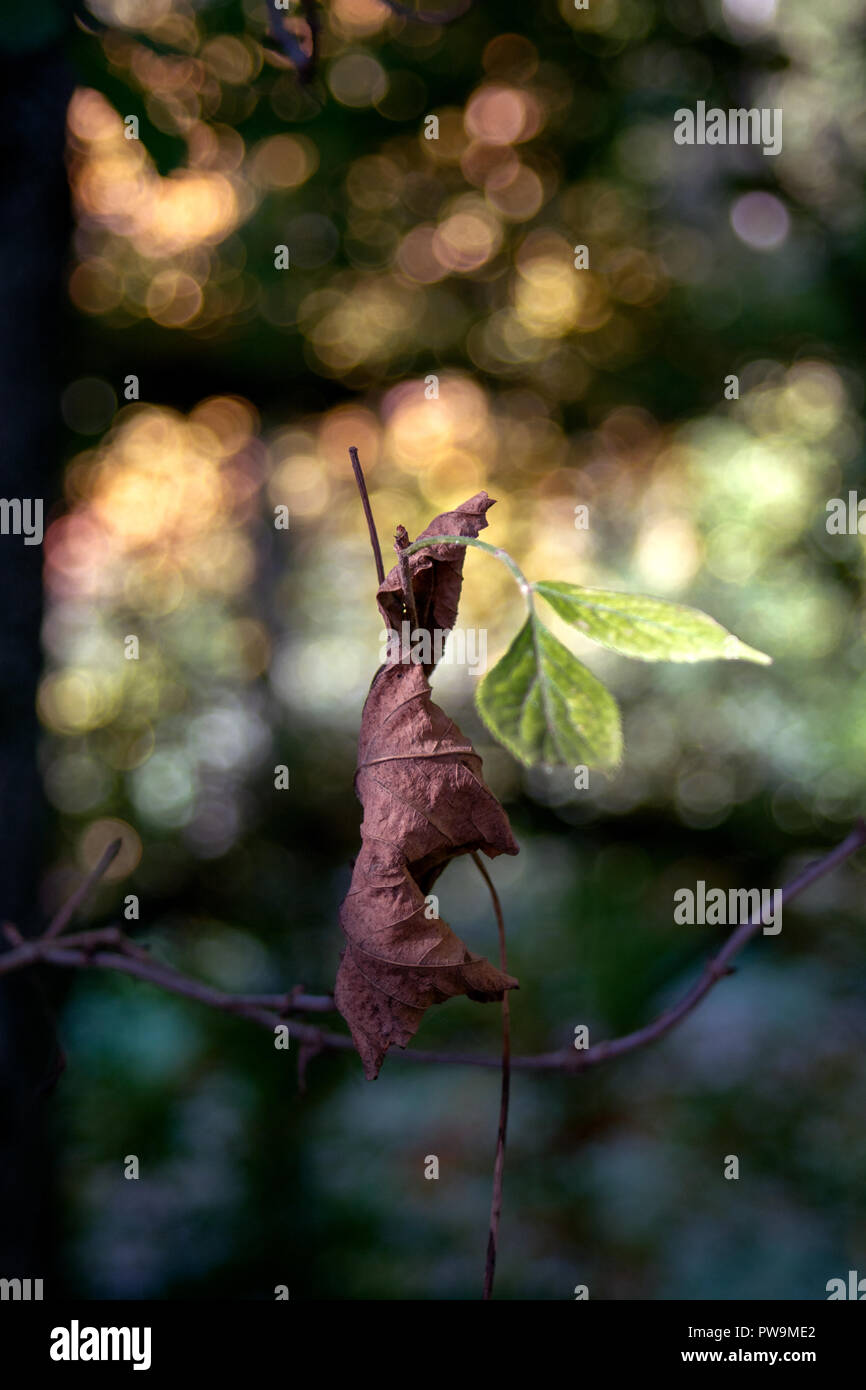 CONCEPT FLORA : Nature fascination - Stock Image