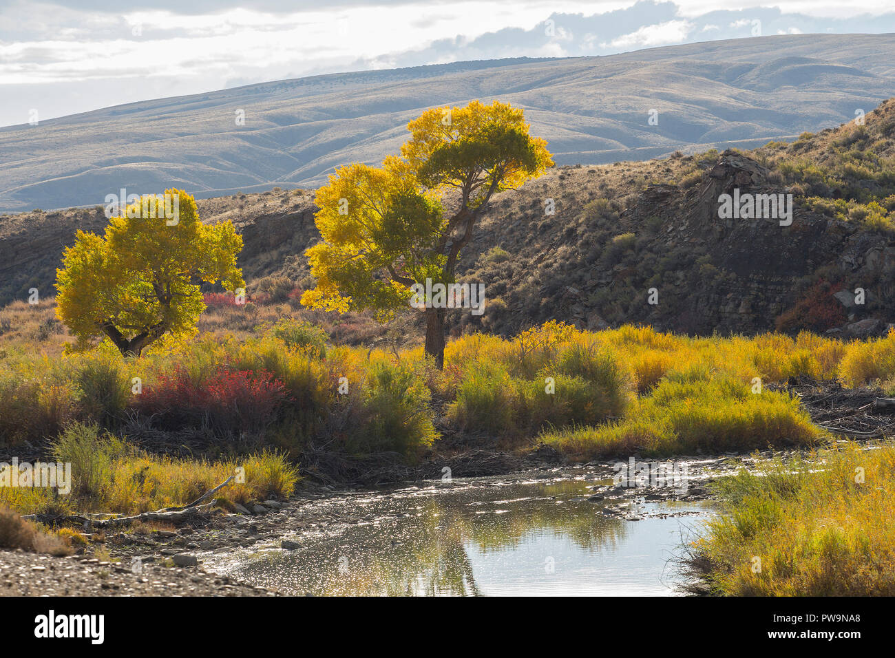 autumn colors and on the north platte river wyoming stock photo