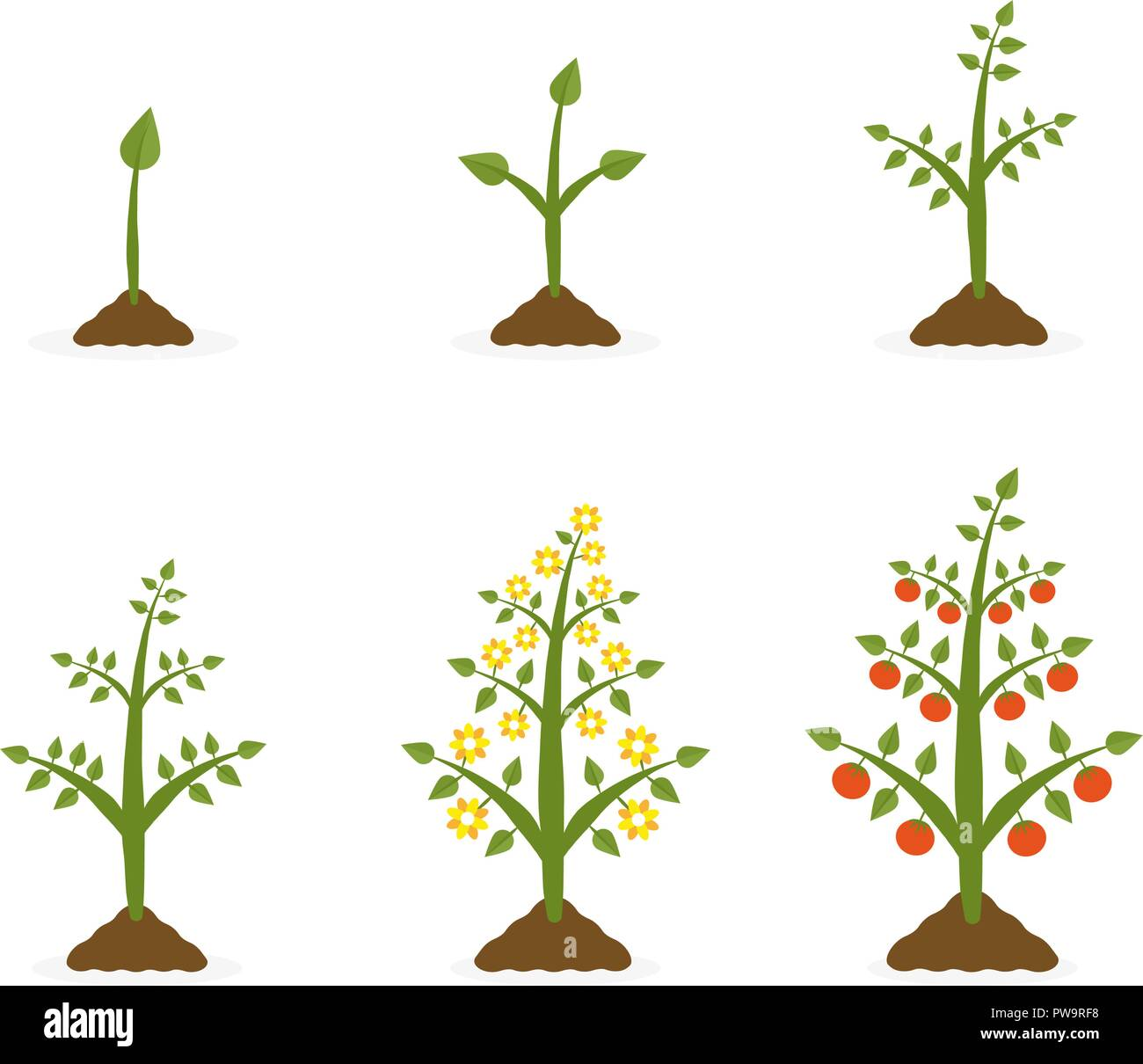 Vector illustration of plant growth stages. Tree with green leaf and red fruit. Planting vegetables concept on white background. - Stock Vector
