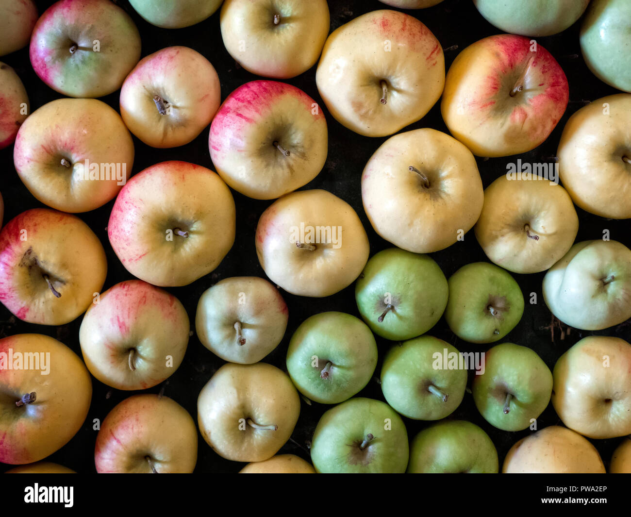 Apples on display at Brogdale Apple Festival  Faversham Kent 2018 - Stock Image