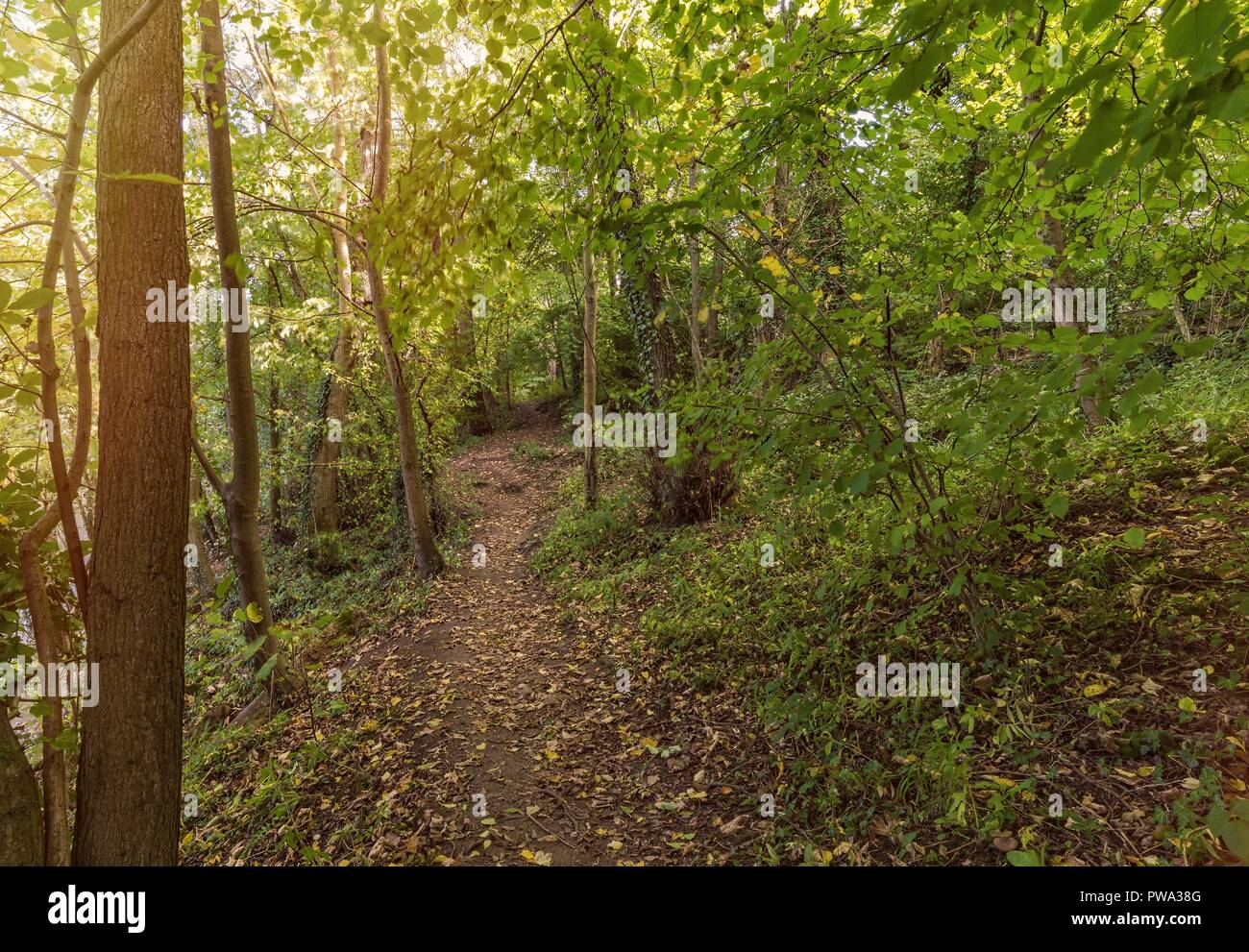 A path runs between some trees where the land slopes down to a river.  The leaves of early autumn have fallen on the path. Stock Photo