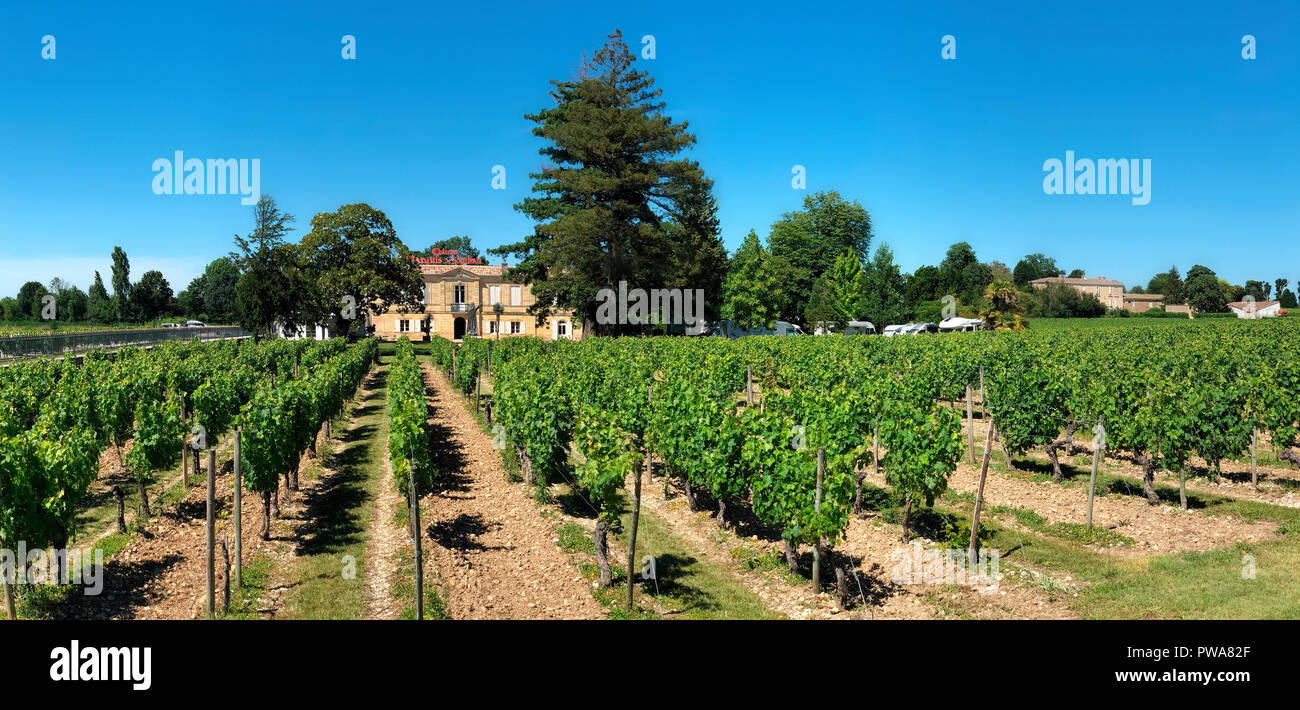 Vineyards at Chateau Marquis de Vaban near the town of Blaye in Nouvelle-Aquitaine region of southwest France. - Stock Image
