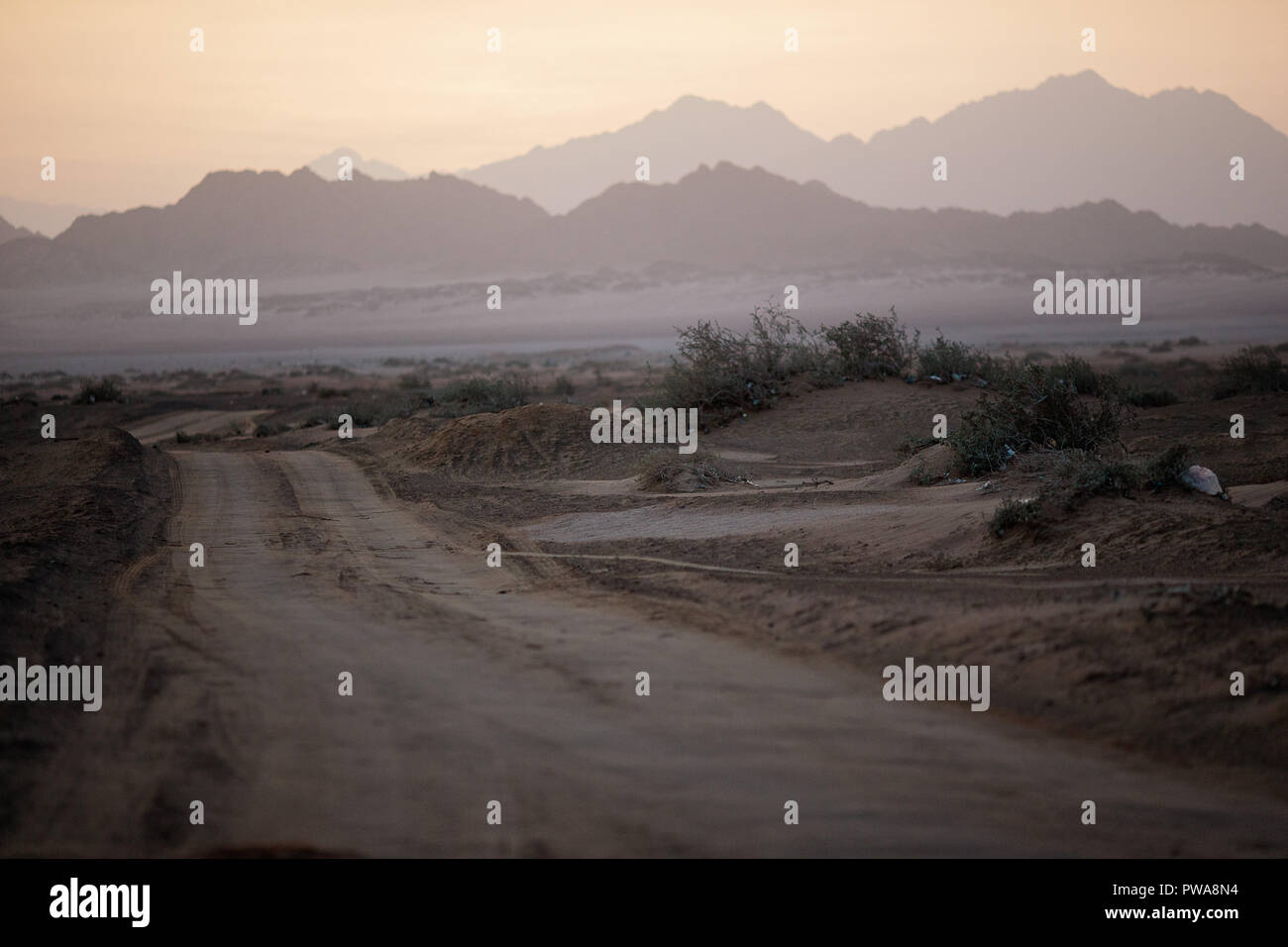 Country Road in Nabq National Park. Sharm El Sheikh. Egypt - Stock Image