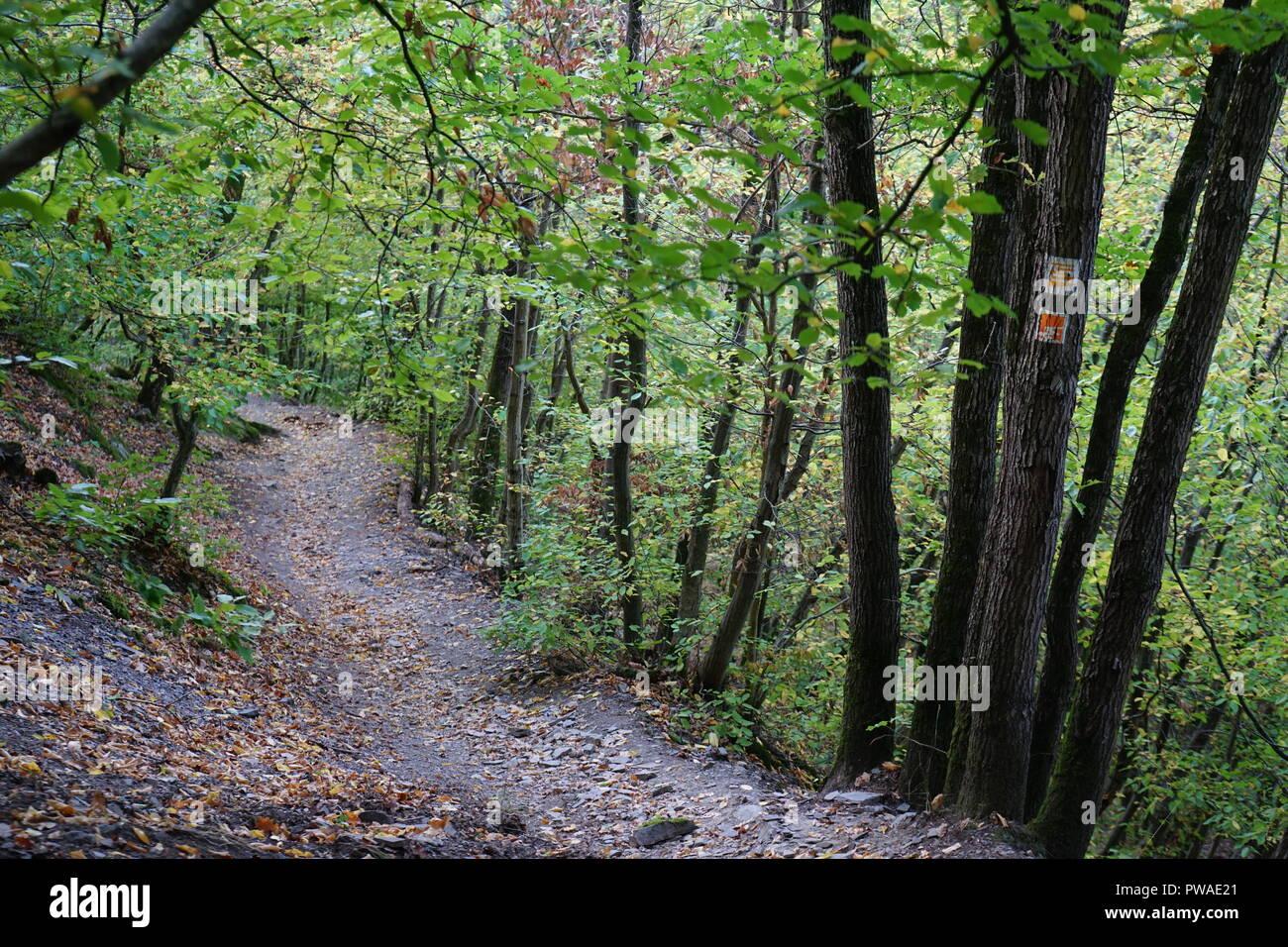 Wanderweg am Moselsteig, bei Hatzenport, Moseltal, Deutschland - Stock Image