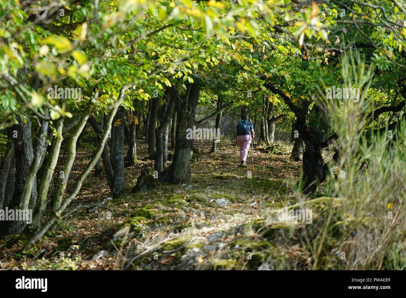 Eichenwald am Martberg, Moselsteig, Moseltal, Rheinland Pfalz, Deutschland - Stock Image