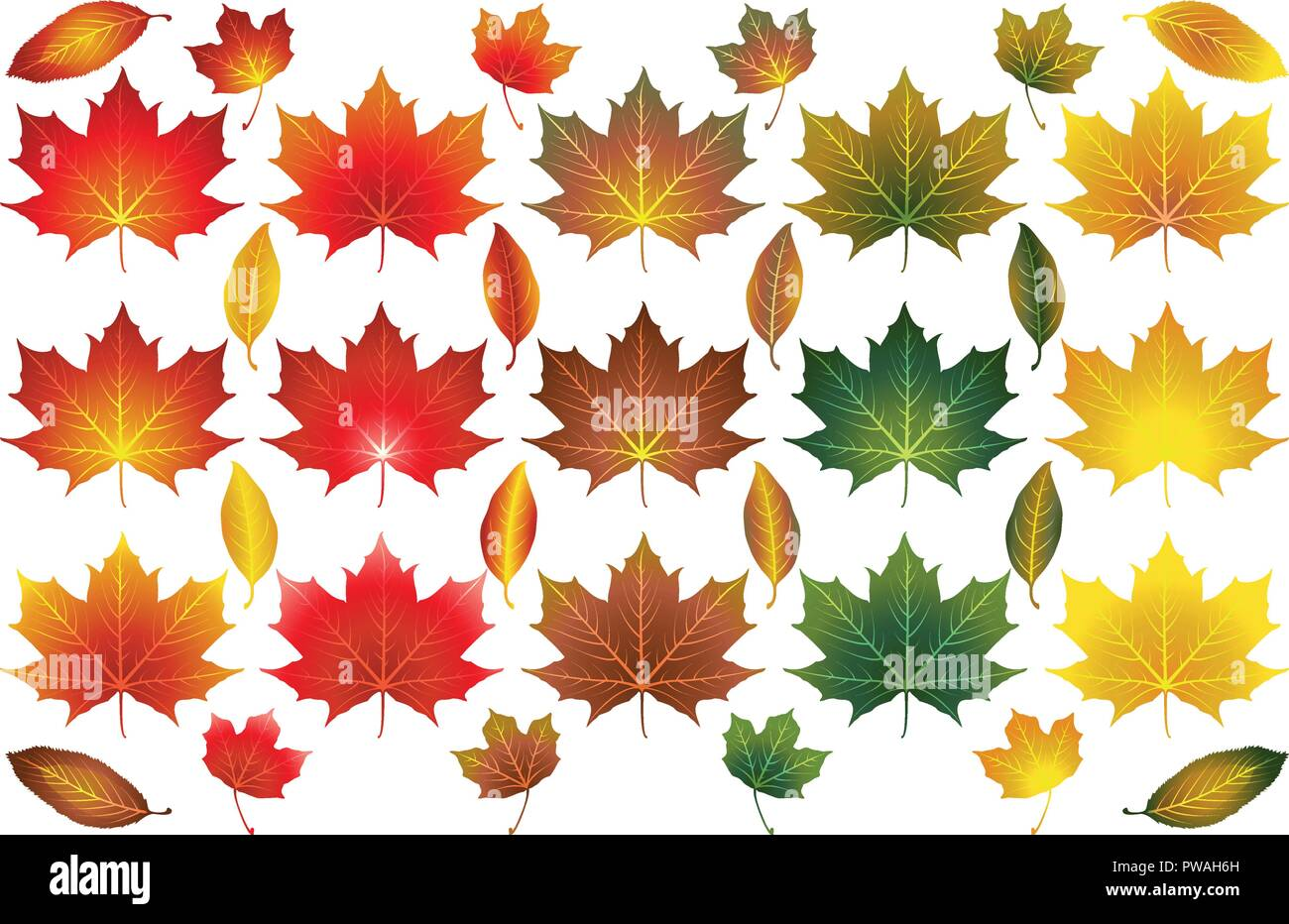 Isolated vector Autumn Fall leaves of different types and colours - Stock Image