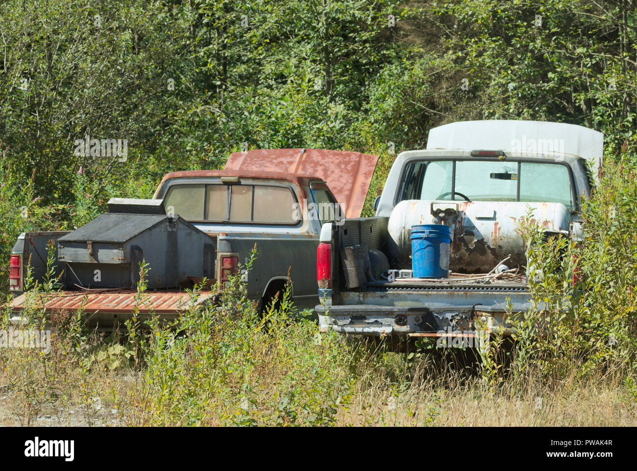 Abandoned Vehicles Stave Lake Bc Canada Stock Photo Alamy