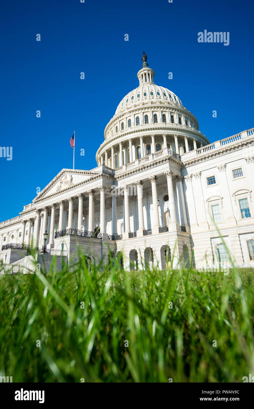 Portrait of the US Capitol building with fresh green grass under bright blue summer sky in Washington DC, USA - Stock Image