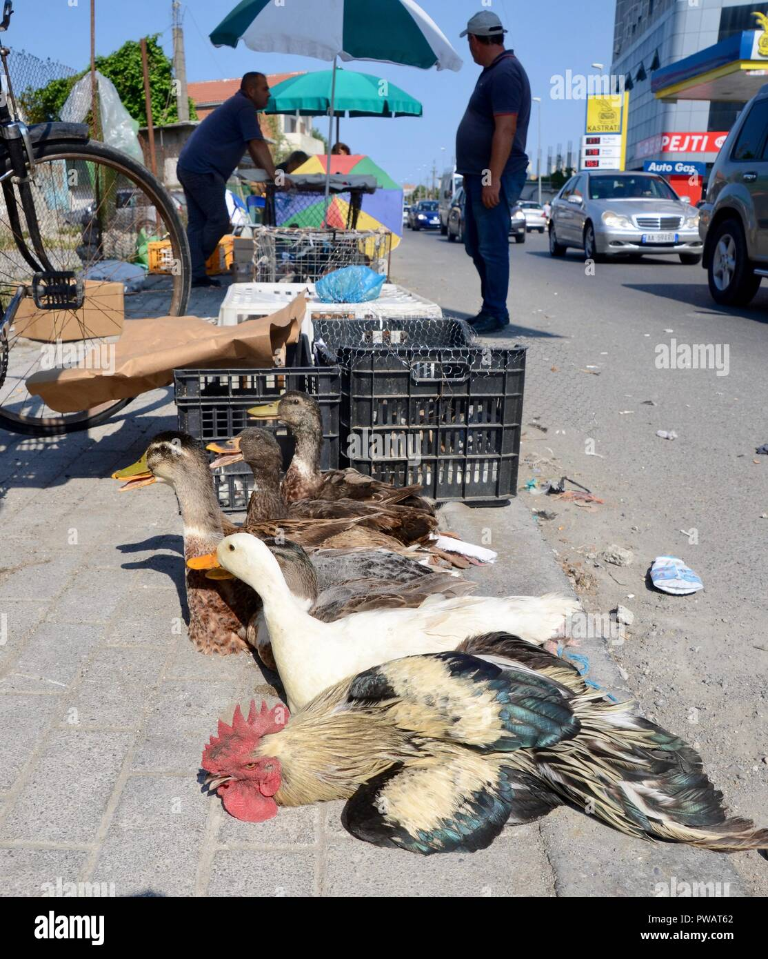 men selling poultry by the roadside in shkoder albania - Stock Image