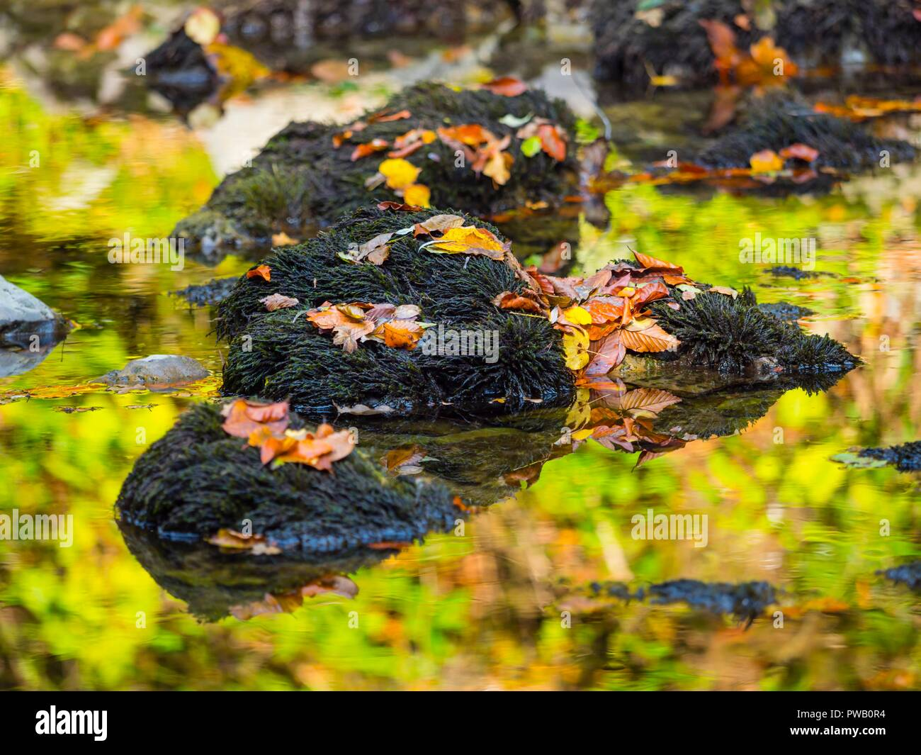 Autumn scenery in nature fallen leaves on rocks - Stock Image