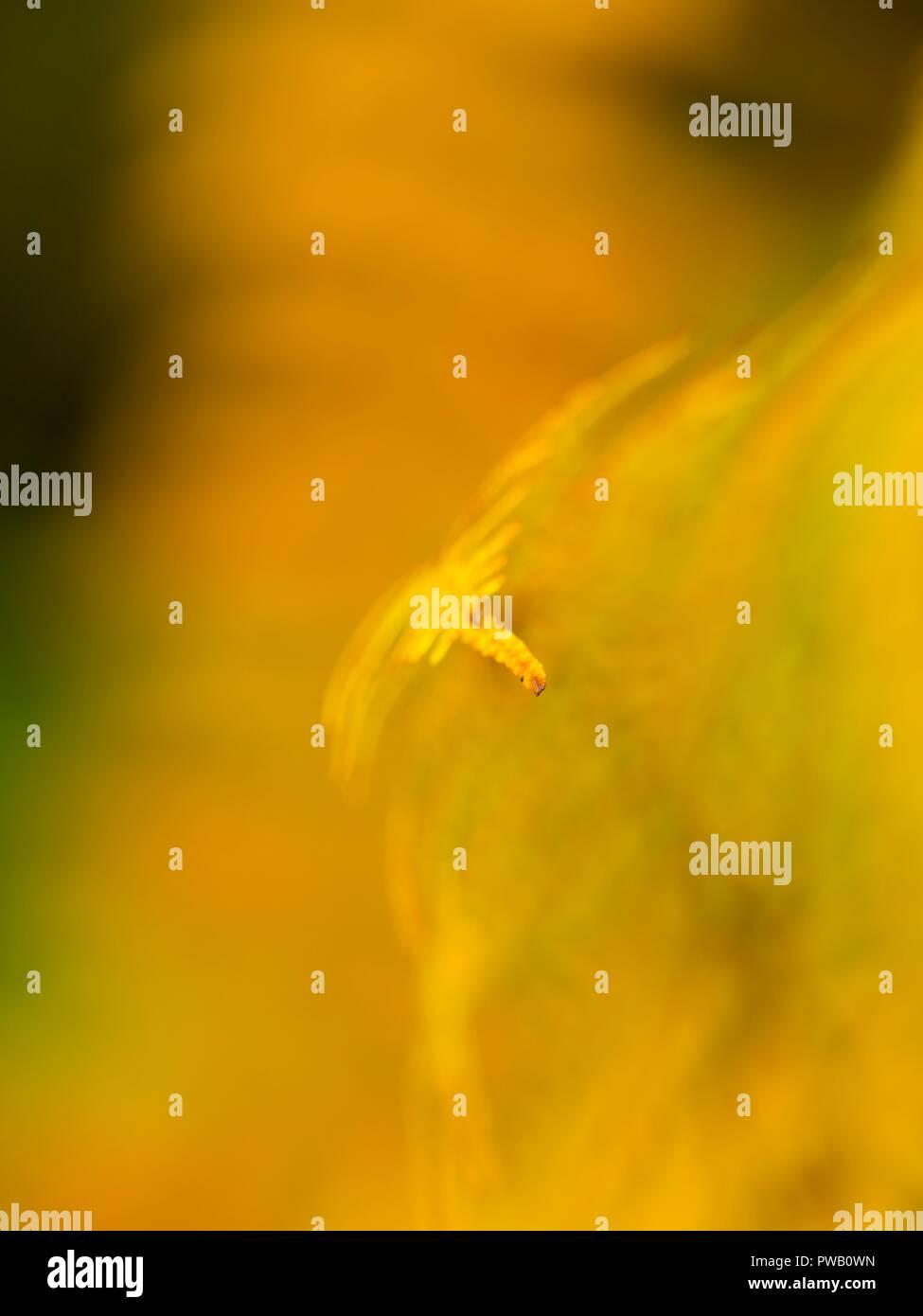 Autumn scenery in nature tip of fern plant near Kupica river in Croatia - Stock Image