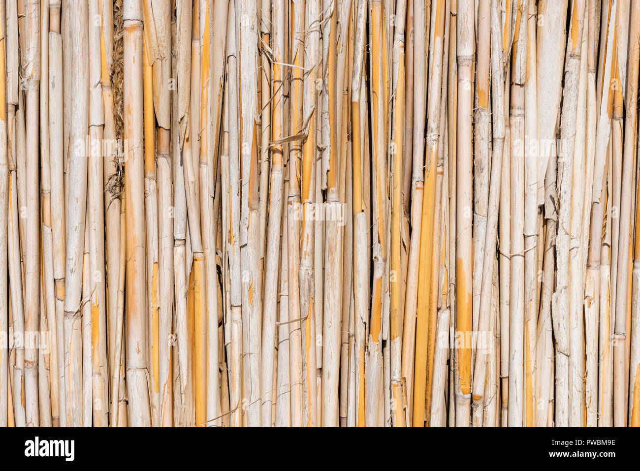 Sedge dry stems in row building fence material - Stock Image