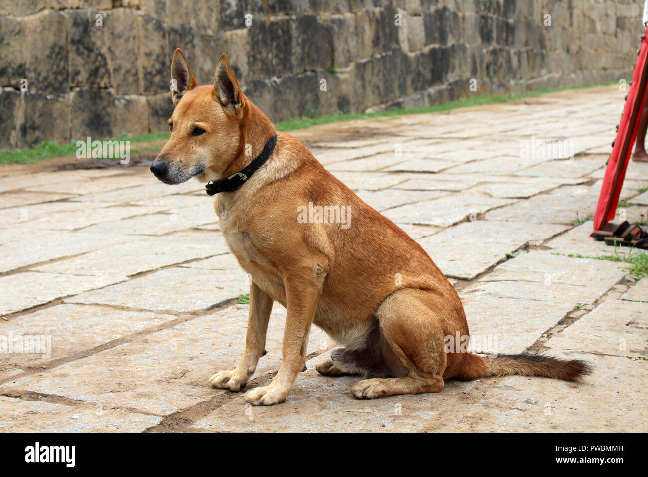 A dog is relaxing around the sellers in Hampi. Taken in India - August 2018. Stock Photo