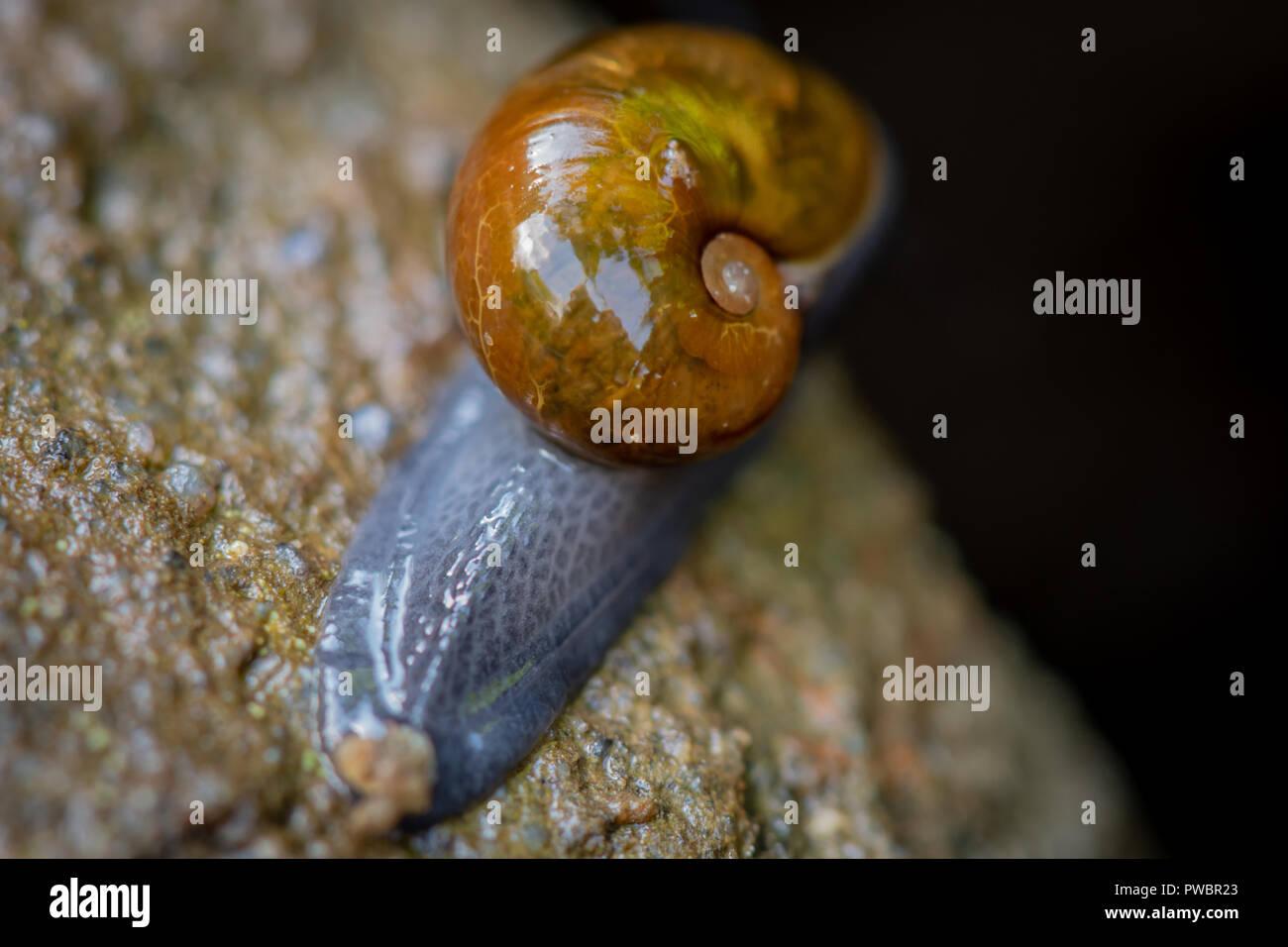 Slimy Snail Crawls on Log in the Smokies Stock Photo
