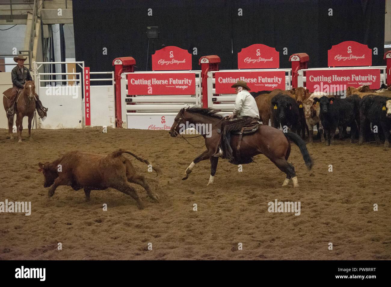 Cutting Horse Stock Photos Amp Cutting Horse Stock Images