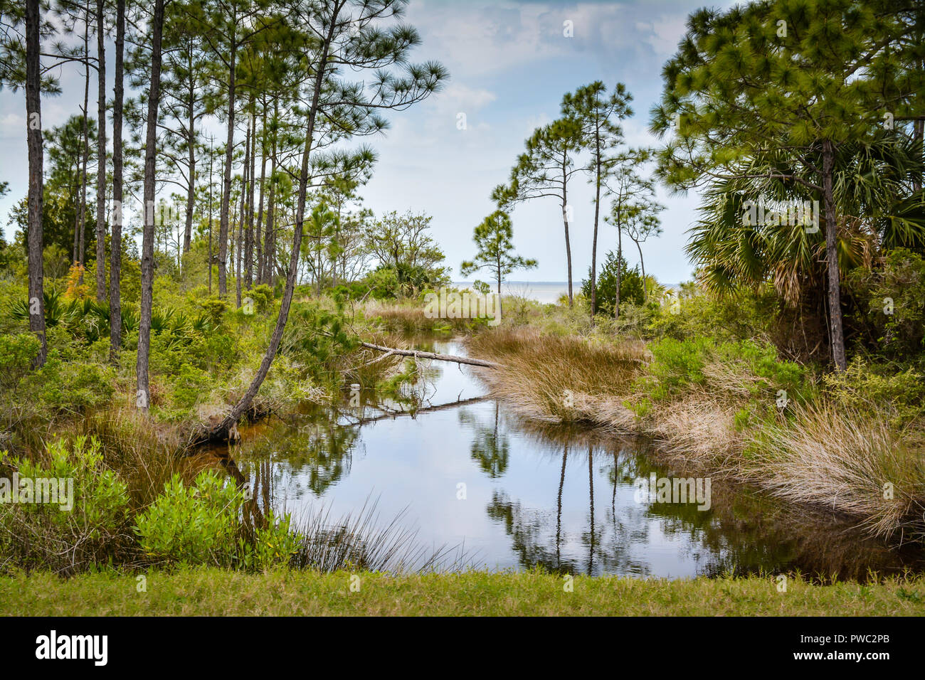 Beautiful view of pines and palms and marshlands along the coastal ways of the Apalachicola Bay in the Panhandle of Florida, USA - Stock Image