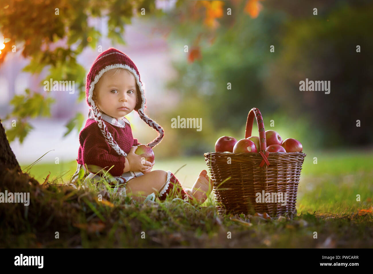 Child eating apples in a village in autumn little baby boy playing with apples kids pick fruit in a basket toddler eating fruits at fall harvest o