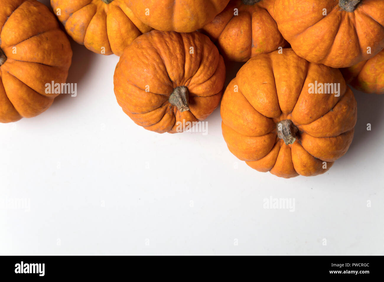 Mini munchkin pumpkin festive background - Stock Image