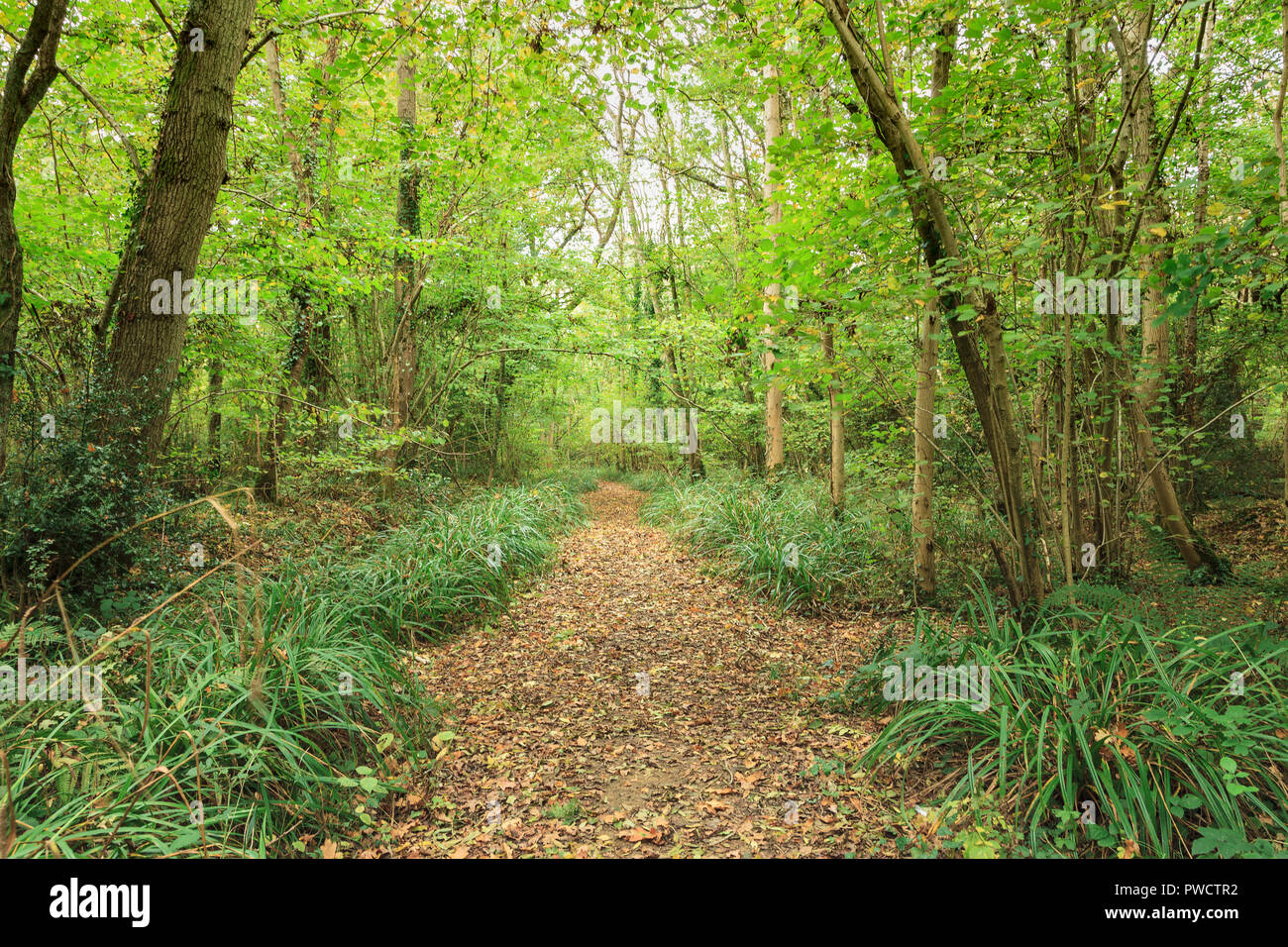Binsted Woods, an ancient wood of wandering footpaths and bridle way, near the village of Binsted West Sussex. - Stock Image
