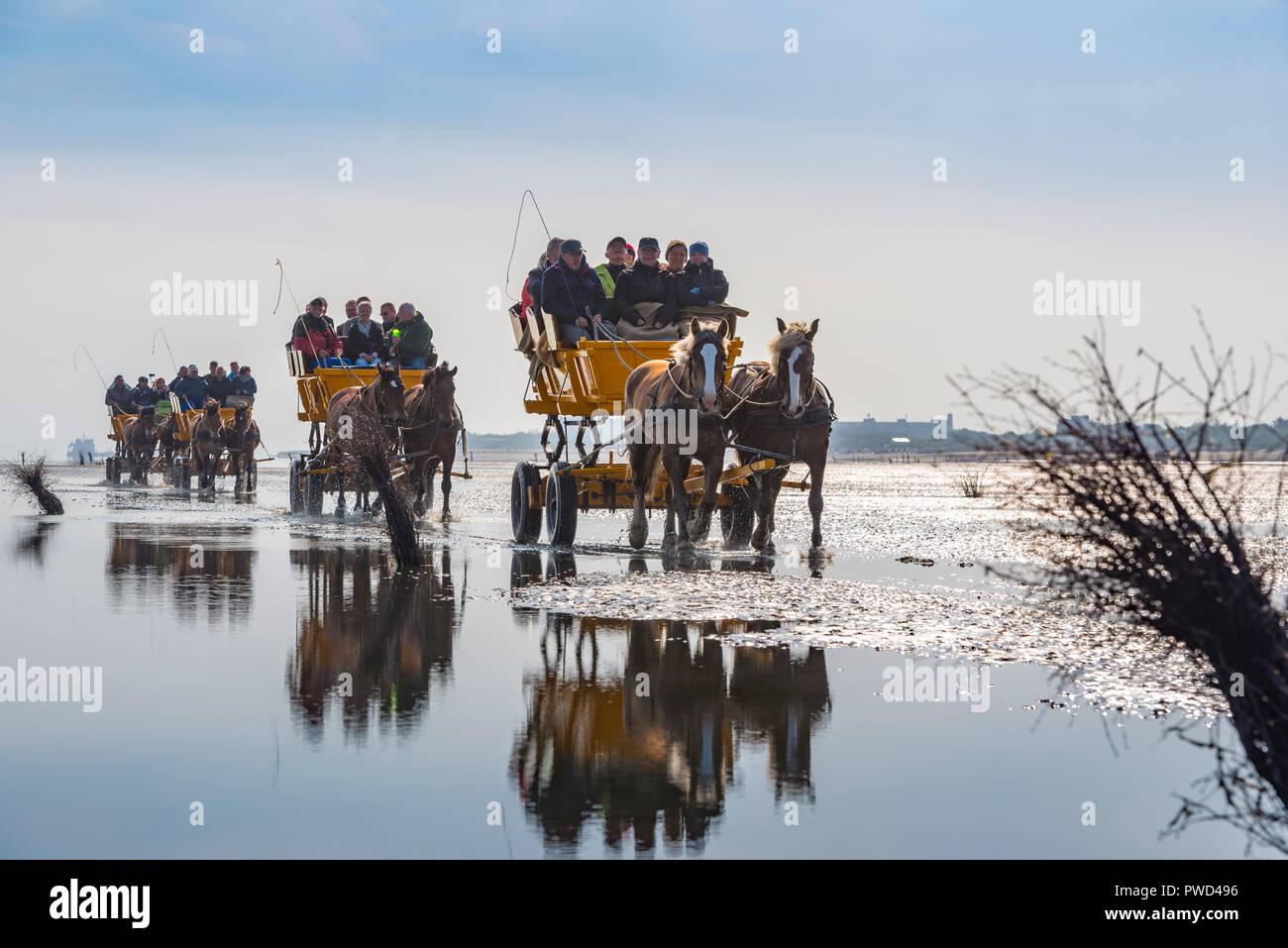 Deutschland, Niedersachsen, Cuxhaven, Neuwerk, Wattenmeer, Watt, Kutsche - Stock Image