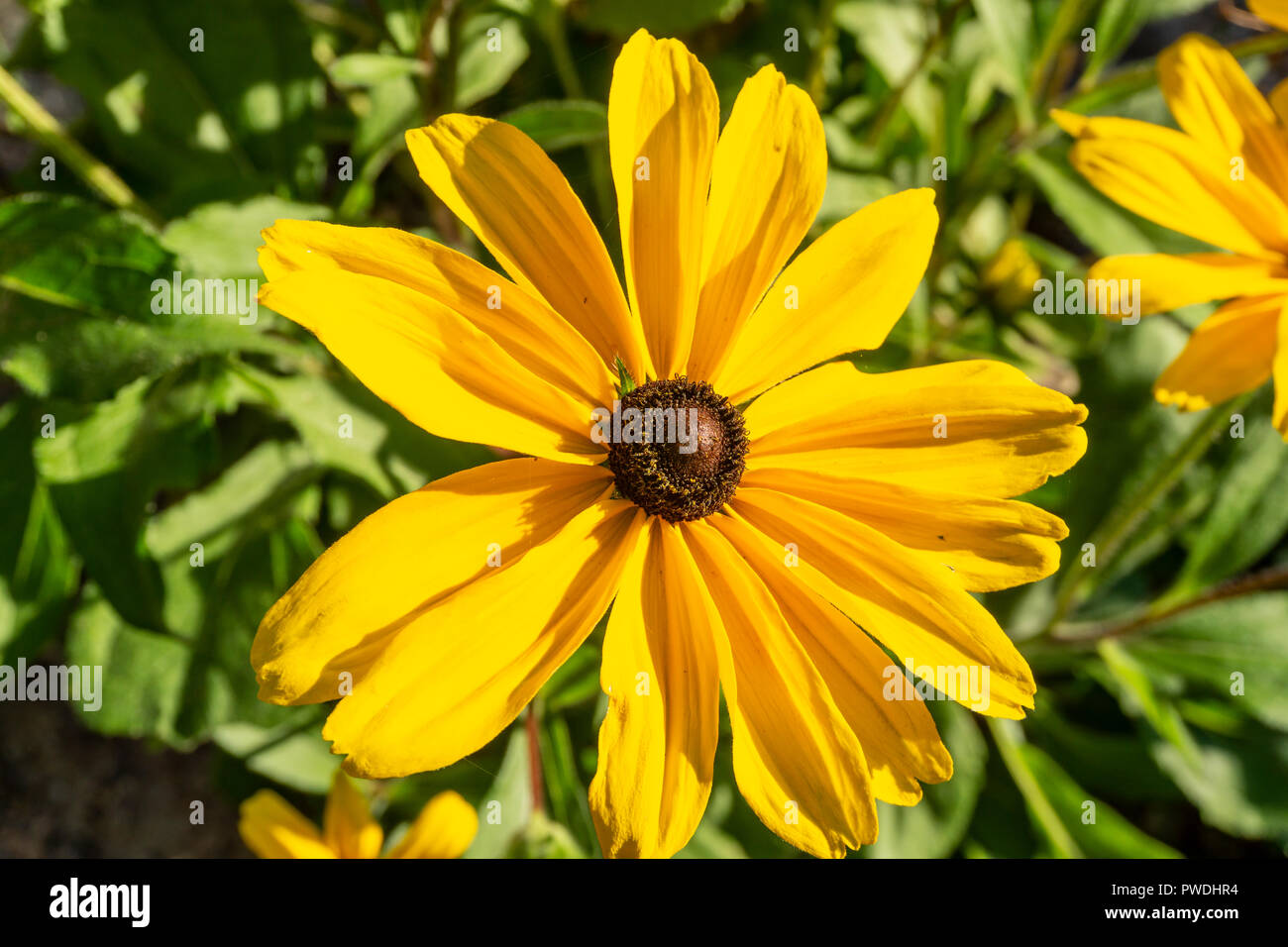Berlin, Germany, October 10, 2018: Close-Up of Yellow Flower Stock Photo