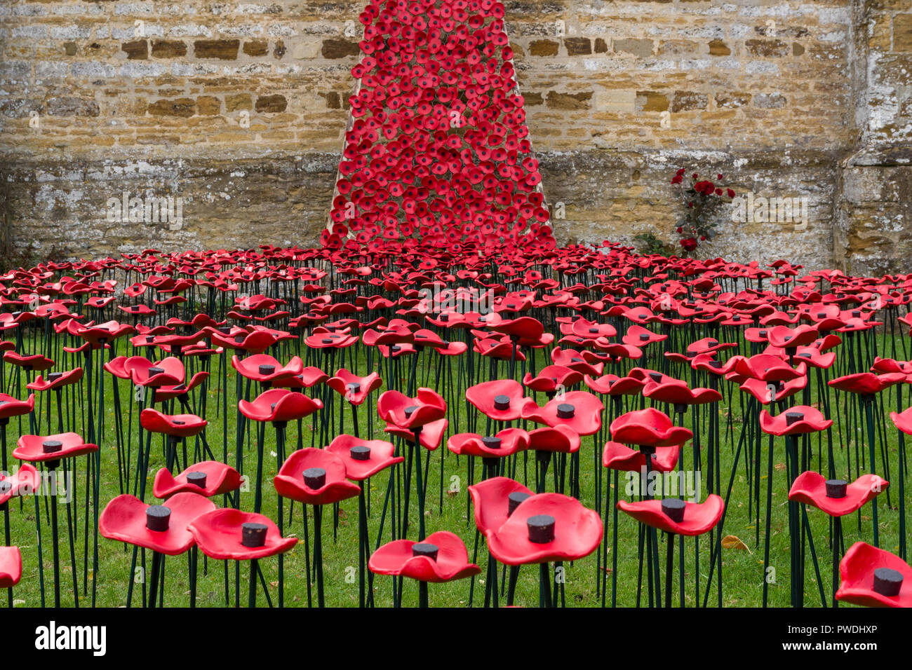 Weeping window display of handmade ceramic poppies for the centenary of WW1, the church of St Peter and St Paul's, Northampton, UK - Stock Image