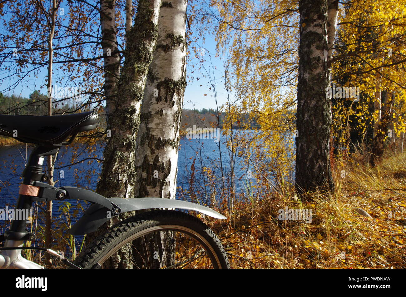 Beautiful autumn colours in forests and rivers around the small rural town of Björbo in Dalarna. - Stock Image